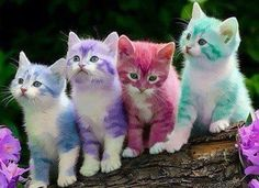 Sorbet kittens. #patrickmartin