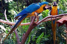 Pretty Parrots!