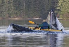 Write from either the whale or the kayaker's perspective. Journal prompts.
