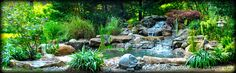 Koi pond with water lilies. Designed and installed by Full Service Aquatics of Summit, NJ.