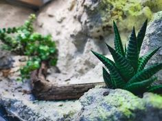 Desert Terrarium Plants Closed Terrarium Plants, Build A Terrarium, Terrarium Ideas, Tropical Terrariums, Tropical Plants, Types Of Ferns, Kalanchoe Blossfeldiana, Lipstick Plant, Crassula Ovata