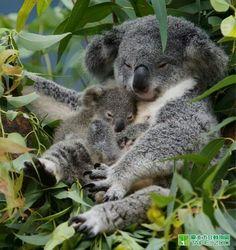 Mum and bub