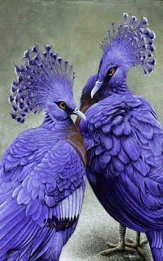 Image IMG 4179 in Beautiful birds album Pretty Birds, Love Birds, Beautiful Birds, Animals Beautiful, Beautiful Couple, Exotic Birds, Colorful Birds, Rare Animals, Animals And Pets