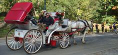 Discover the Beauty of Horse and #CarriageRides in Central Park  #HorseRides #CentralPark #NY