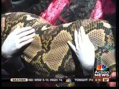 Largest snake living in captivity Medusa sets world record