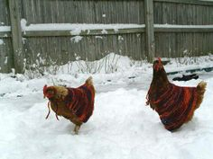 Hens in Wraps
