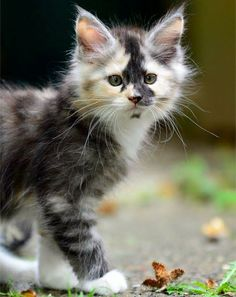 What a precious kitten!