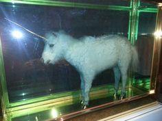 Dismaland - unicorn Bansky, Unicorn, Horses, Animals, Art, Art Background, Animales, Animaux, Kunst