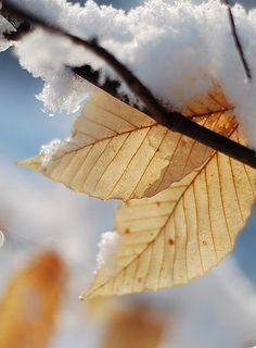 As cores do inverno