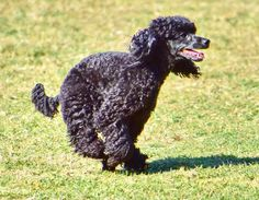 Training, Pets, Books, Animals, Coaching, Animals And Pets, Livros, Animales, Libros