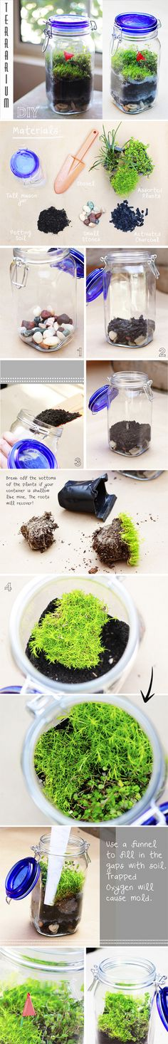 """DIY TERRARIUM :: Jar Terrarium Tutorial & Supplies List for any Terrarium :: You will need: A tall glass container with a lid (so there's ample space for soil & for plants to grow upward), assorted plants that require indirect sunlight, moss (i.e. """"Scotch Moss"""" & """"Baby Tears"""" bc they adapt to a moist environment), potting soil (you can mix it w/ sand), small rocks/pebbles (i.e. aquarium stones) & ACTIVATED CHARCOAL (it absorbs the moisture, so that your terrarium doesn't get moldy and…"""