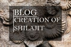 """We're going to dig deep into creation of Shilajit and try to uncover its origin. Is it celestial? Where do all of its """"healing powers"""" come from? Since we believe in scientifical approach, we used the extensive research of respected Dr. Ghosal to uncover its secrets. Want to know more? Read on! Dig Deep, Healing, Celestial, Blog, Blogging, Therapy, Recovery"""