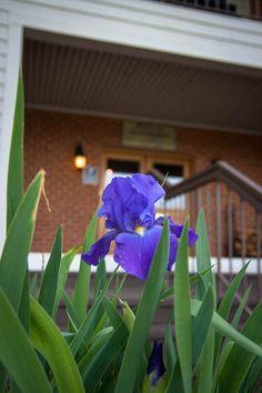 A welcoming Shenandoah hideaway at the Iris Inn www.casualtravelist.com