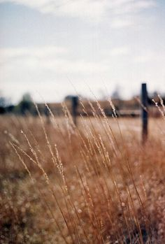 the country--fields of gentle brown
