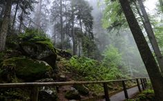Black Forest - the best german hiking trail Check out these 10 Best Hiking Trails in Germany that will leave you invigorated! Forest Camp, Forest Trail, Places To Travel, Places To See, Black Forest Germany, Haunted Forest, Hiking Europe, Safari Adventure, Pacific Crest Trail