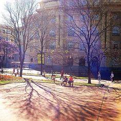Linda sombra de uma das árvores da Praça da liberdade - BH