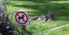 cat on lawn forbidden to dogs