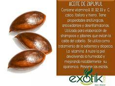 Aceite de Zapuyul.  Mammy Apple Seed Oil.
