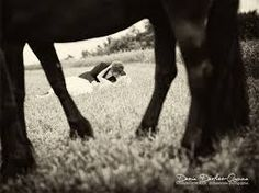 Bildergebnis für hochzeitsfotos mit pferd