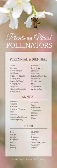 A handy list of plants that attract pollinators! (butterflies, bees, hummingbird… A handy list of plants that attract pollinators! Organic Gardening, Gardening Tips, Butterfly Weed, Butterflies, Hummingbird Garden, Save The Bees, Bee Keeping, Dream Garden, Garden Plants
