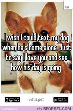 Did you ever wish you could text your pet whenever you were out just to say you miss him?