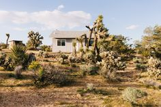 Joshua Tree midcentury home becomes writer's refuge - Curbedclockmenumore-arrow : A San Franciscan's first home offers a sanctuary—and an opportunity to live slower