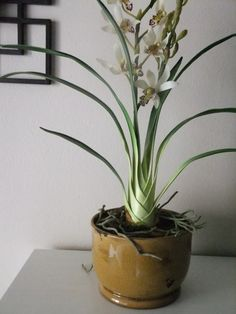30 Quality Silk White Cymbidium in Mustard by FineOrchidCreations