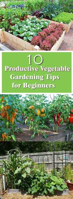 productive vegetable gardening tips