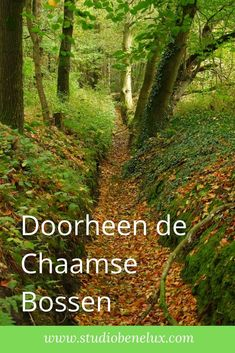 Walking In Sunshine, Homeland, Netherlands, Road Trip, Places To Visit, Wanderlust, Hiking, Country Roads, Landscape