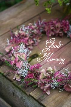 Good Morning, Hapy Day, Buen Dia, Bonjour, Good Morning Wishes