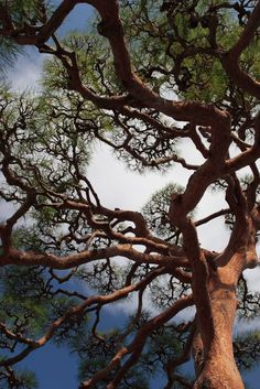 Branches by mrhayata | Flickr - Photo Sharing!