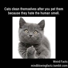 Cats Clean Themselves After You Pet Them
