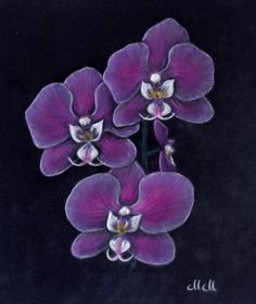 Violet orchid art - purple orchid art painting, flower pastel painting, orchid wall art, purple orchid pastel painting, orchid illustration by MMArtStudioSI on Etsy