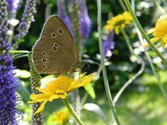 Zjawiska i krajobrazy  #beautiful #world #butterfly #colors #yellow #and #purple