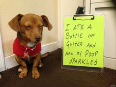 Dog Shaming features the most hilarious, most shameful, and never-before-seen doggie misdeeds. Join us by sharing in the shaming and laughing as Dog Shaming reminds us that unconditional love goes both ways. Funny Animal Memes, Dog Memes, Cute Funny Animals, Funny Animal Pictures, Funny Cute, Funny Dogs, Funny Memes, Funny Dog Shaming, Animal Funnies