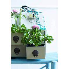 cute idea for indoor plants