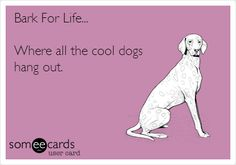 Bark For Life... Where all the cool dogs hang out.