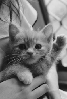 Adorable kitten -- Aw, kitties :3