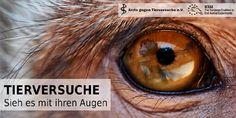Ärzte gegen Tierversuche - Tierversuche - Sieh es mit ihren Augen