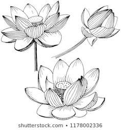 Images, photos et images vectorielles de stock de lotus flower. Full name of the plant: lotus. wildflower for background, texture, wrapper pattern, frame or border. Flower Pattern Drawing, Flower Line Drawings, Floral Drawing, Art Lotus, Lotus Flower Art, Mehndi Art Designs, Flower Tattoo Designs, Vector Flowers, Botanical Flowers