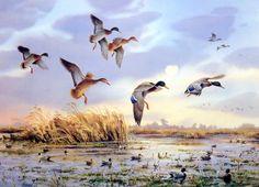 Waterfowl Paintings by Jim Killen 11 Wildlife Paintings, Wildlife Art, Animal Paintings, Hunting Painting, Hunting Art, Duck Hunting Season, Dog Artist, Duck Art, Waterfowl Hunting