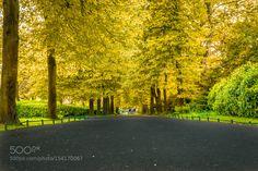 Popular on 500px : trees 2 by AbdulrahmanAl-Mopti