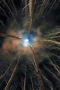 """""""The moon is friend for the lonesome to talk to."""" ~ Carl Sandburg 'Forest & Moon' By Babis Mavrommatis Beautiful Moon, Beautiful World, Foto Picture, Shoot The Moon, Moon Pictures, Belle Photo, Night Skies, Nature Photography, Night Photography"""