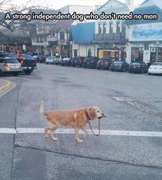 Un perro muy independiente que no necesita de humanos #humor #animales #perros