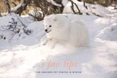 5 expert tips from professional pet photographers on how to get the best Winter Dog Photos. Includes full pet photography tips and dog photography. Mastador Dog, Cavoodle Dog, Pet Photography Tips, Animal Photography, Pappillon Dog, Koolie Dog, Kangal Dog, Borzoi Dog, Dog Accesories