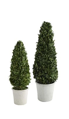 Feel free to retire your garden hose. These trees have zero need for water, are made of preserved boxwood and pruned to perfection. Boxwood Topiary, Topiary Trees, Topiaries, Artificial Boxwood, Artificial Tree, Mini Plants, Cactus Plants, Preserved Boxwood, Japanese Tree