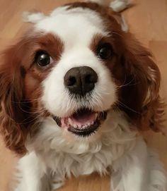 #muffintheblacknose🐶🐕🐶#dog #puppy#cute #instagood #dogs_of_instagram #pet#animal #petstagram  #photooftheday #dogsofinstagram #ilovemydog #dogoftheday #lovedogs #lovepuppies #doglover #instapuppy #instadog  #instagood  #smile #cute #photooftheday #beautiful #happy #picoftheday#swag #amazing  #fun #summer #bestoftheday #smile#friends