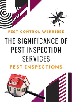 Did you wish to have a pest inspection done? Here's a full list of the top things that can help you learn more about facilities for pest inspection. #pestcontrol #pestcontrolservice #pestinspection #termitecontrol #pestmanagement Pest Inspection, Termite Control, Pest Management, Pest Control Services, Brisbane, Investing, Learning, Top, Studying