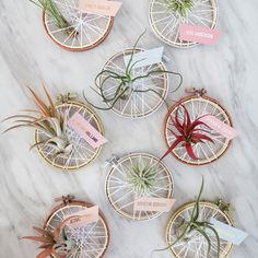 In this article we're sharing how you can make these adorable mini-embroidery hoop, air plant favors that double as seating cards! Embroidery Hoop Decor, Diy Embroidery, Creative Wedding Favors, Diy Wedding Projects, Bridal Shower Favors, Floral Centerpieces, Air Plants, Diy Flowers, Christmas Crafts