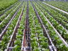 Increasing Investment in Advanced Irrigation Methods to Foster the Growth of Drip Irrigation Market in Future Global drip irrigation market is expected to flourish at a significant CAGR of 10.5% over the forecast period. Moreover, drip irrigation market is expected to garner USD 4.3 Billion by the end of 2023.